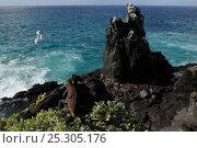 Купить «Marine Iguana (Amblyrhynchus cristatus) basks on volcanic rock high above the sea as a gull flies past. Punta Suarez, Espaniola, Galapagos, Ecuador, April.», фото № 25305176, снято 23 января 2019 г. (c) Nature Picture Library / Фотобанк Лори