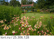 Купить «Alstroemeria flowers in The Spider Garden at Hoveton Hall, Norfolk, UK», фото № 25306128, снято 18 октября 2019 г. (c) Nature Picture Library / Фотобанк Лори