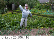 Купить «Garden scarecrow in vegetable garden, Norfolk, UK», фото № 25306416, снято 26 мая 2019 г. (c) Nature Picture Library / Фотобанк Лори