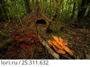 Купить «Bower of Vogelkop Bowerbird (Amblyornis inornata) decorated with orange leaves, dark orange fungi, and blue berries. West Papua, Indonesia, Dec 2008», фото № 25311632, снято 19 июля 2018 г. (c) Nature Picture Library / Фотобанк Лори