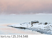 Купить «Arctic sea mist over the Varangerfjord, wooden fishing hut on the promontory, Byluft, Nesseby, Finnmark, Norway.», фото № 25314548, снято 24 мая 2018 г. (c) Nature Picture Library / Фотобанк Лори