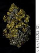Купить «Chalcopyrite (CuFeS2) (Golden) - Commodore Mine - Colorado - USA - The major ore of copper - Copper Iron sulfide. Very important economic ore», фото № 25328124, снято 23 сентября 2018 г. (c) Nature Picture Library / Фотобанк Лори