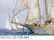 Купить «Yachts racing at the Panerai Antigua Classic Yacht Regatta, Caribbean, April 2010.», фото № 25336444, снято 16 октября 2019 г. (c) Nature Picture Library / Фотобанк Лори