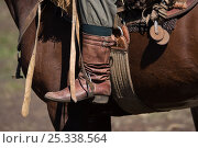 Купить «The traditional boots, stirrups and tack of a gaucho (cowboy) mounted on a horse (Equus Caballus), during the Fiesta De La Patria Gaucho, Tacuarembo, Uruguay, April 2008», фото № 25338564, снято 13 декабря 2017 г. (c) Nature Picture Library / Фотобанк Лори