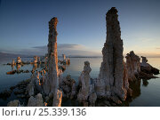Morning light on calcium carbonate Tufa towers in mineral rice lake waters, Mono Basin National Forest Scenic Area, INYO National Forest, California, USA, June 2008. Стоковое фото, фотограф Thomas Lazar / Nature Picture Library / Фотобанк Лори