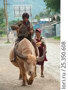 Купить «Boy riding a bull, Inle Lake, Shan State, Myanmar, Burma.  August 2009», фото № 25350608, снято 17 августа 2018 г. (c) Nature Picture Library / Фотобанк Лори