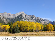 Купить «Bow Valley in autumn, Banff National Park, Rocky Mountains, Alberta, Canada, September 2009», фото № 25354112, снято 31 мая 2020 г. (c) Nature Picture Library / Фотобанк Лори