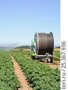 Купить «Commercial Potato irrigation, showing reel of water pipe and irrigator, Norfolk, UK, June», фото № 25367936, снято 15 августа 2018 г. (c) Nature Picture Library / Фотобанк Лори
