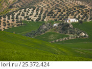 Купить «Aerial view of farm building, olive groves and farmland, near Seville, Andalucia, Spain, February 2008», фото № 25372424, снято 10 июля 2020 г. (c) Nature Picture Library / Фотобанк Лори