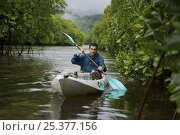 Купить «Field Assistant Zafer Kizilkaya paddling a kayak through a mangrove channel. The forested slopes of Kosrae Island are in the background. Kostrae Island...», фото № 25377156, снято 19 июля 2018 г. (c) Nature Picture Library / Фотобанк Лори