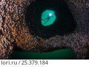 Купить «Diver (Klas Malmberg) looking into giant underwater cauldron, Saltstraumen, Bodö, Norway, October 2008», фото № 25379184, снято 20 ноября 2019 г. (c) Nature Picture Library / Фотобанк Лори
