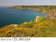Купить «Petit Bot Bay, south-east coast of Guernsey, Channel Islands, May 2009.», фото № 25380024, снято 14 декабря 2017 г. (c) Nature Picture Library / Фотобанк Лори