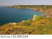 Купить «Petit Bot Bay, south-east coast of Guernsey, Channel Islands, May 2009.», фото № 25380024, снято 26 февраля 2018 г. (c) Nature Picture Library / Фотобанк Лори