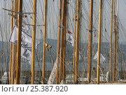 Купить «Wooden yacht masts, Les Voiles de St Tropez, France. October 2006.», фото № 25387920, снято 16 августа 2018 г. (c) Nature Picture Library / Фотобанк Лори
