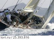Купить «J-Class Velsheda, Maxi Yacht Rolex Cup, Porto Cervo, Sardinia, Italy, September 2008.», фото № 25393816, снято 25 мая 2018 г. (c) Nature Picture Library / Фотобанк Лори
