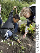 Купить «Teacher helping a school boy to plant a shrub, UK», фото № 25398432, снято 19 октября 2018 г. (c) Nature Picture Library / Фотобанк Лори