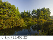 A beaver flowage on the Isinglass River in Strafford, New Hampshire, USA. Стоковое фото, фотограф Jerry Monkman / Nature Picture Library / Фотобанк Лори