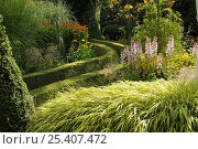 Купить «Trimmed Boxwood path in shady area of garden, with ornamental grasses in foreground, Norfolk, UK, July», фото № 25407472, снято 18 октября 2019 г. (c) Nature Picture Library / Фотобанк Лори