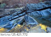 Купить «Water reflections in Hamersley Gorge water pool, Karijini NP, Western Australia», фото № 25421772, снято 16 августа 2018 г. (c) Nature Picture Library / Фотобанк Лори