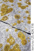 Купить «Lichens growing on a cracked granite rock, La Coruna, Galicia, Spain», фото № 25424116, снято 17 августа 2018 г. (c) Nature Picture Library / Фотобанк Лори