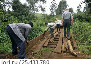 Купить «Laying planks to mend bridge to enable vehicle to cross river, Kilum-Ijim Forest Project zone, Bamenda Highlands, North West Province, Cameroon», фото № 25433780, снято 12 ноября 2019 г. (c) Nature Picture Library / Фотобанк Лори