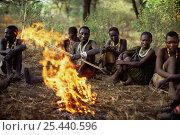Купить «Hadzabe hunter gatherer tribesmen sitting round camp fire for evening storytelling, Lake Eyasi Basin, Tanzania 2006», фото № 25440596, снято 14 ноября 2019 г. (c) Nature Picture Library / Фотобанк Лори