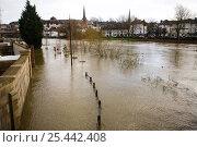 Купить «River Severn overflowing its banks in Shrewsbury, Shropshire, UK, winter 2006/7», фото № 25442408, снято 25 мая 2018 г. (c) Nature Picture Library / Фотобанк Лори