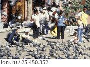 Купить «People feeding Pigeons outside monastery, Ullan-Baator, Mongolia.», фото № 25450352, снято 21 февраля 2019 г. (c) Nature Picture Library / Фотобанк Лори