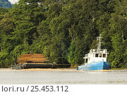 Купить «Boat towing barge laden with felled and milled timber, Kinabatangan River, Sabah, Borneo.», фото № 25453112, снято 17 июля 2018 г. (c) Nature Picture Library / Фотобанк Лори