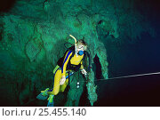 Купить «Diver with marker line at the Carwash cenote / sinkhole freshwater diving site, Mexico», фото № 25455140, снято 25 января 2020 г. (c) Nature Picture Library / Фотобанк Лори