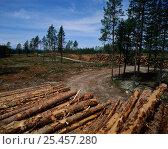 Купить «Logging timber in Ravisch pine forest, Dalarna, Sweden», фото № 25457280, снято 23 сентября 2018 г. (c) Nature Picture Library / Фотобанк Лори
