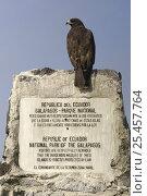 Купить «Galapagos hawk (Buteo galapagoensis) perched on national park sign, Hood / Española Is, Galapagos  2006», фото № 25457764, снято 20 марта 2019 г. (c) Nature Picture Library / Фотобанк Лори