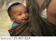 Купить «Jo / Hoan bushman baby in sling on mother's back, Bushmanland, Namibia. 1996», фото № 25461824, снято 7 апреля 2020 г. (c) Nature Picture Library / Фотобанк Лори