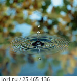 Купить «Water drops striking water surface making concentric circles», фото № 25465136, снято 13 ноября 2018 г. (c) Nature Picture Library / Фотобанк Лори