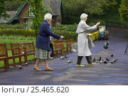 Купить «Women feeding Feral pigeons / Rock doves {Columba livia} in city park. Edinburgh, Scotland, UK.», фото № 25465620, снято 17 октября 2018 г. (c) Nature Picture Library / Фотобанк Лори