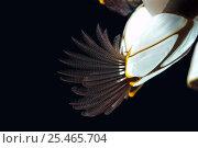Купить «Feeding Goose barnacle (Lepas anatifera) found attached to drifting oceanic buoy, Atlantic ocean», фото № 25465704, снято 26 сентября 2018 г. (c) Nature Picture Library / Фотобанк Лори