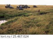 Купить «Safari tourists watching  African lion {Panthera leo} Masai Mara reserve, Kenya», фото № 25467024, снято 23 июля 2018 г. (c) Nature Picture Library / Фотобанк Лори