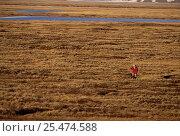 Купить «Man on tundra wetlands, Kolyma river delta, Siberia, Russia», фото № 25474588, снято 19 сентября 2019 г. (c) Nature Picture Library / Фотобанк Лори