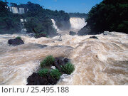 Купить «Iguazu falls Brazil / Argentina border, South America. Iguassu», фото № 25495188, снято 19 сентября 2019 г. (c) Nature Picture Library / Фотобанк Лори