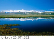 Купить «Altai mountains Plateau Ukok - View to China's Five Sacred Peaks from China / Russia border», фото № 25501332, снято 15 августа 2018 г. (c) Nature Picture Library / Фотобанк Лори