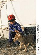 Купить «Kazakh boy with Wolf cub pet nr Tsengel Khairkhan, Western Mongolia. 2001», фото № 25502956, снято 15 июля 2020 г. (c) Nature Picture Library / Фотобанк Лори