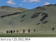 Купить «Kazakh horse race nr Tsengel Khairkhan, Western Mongolia. 2001», фото № 25502964, снято 19 сентября 2018 г. (c) Nature Picture Library / Фотобанк Лори