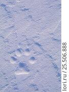 Купить «Arctic wolf footprint {Canis lupus arctos} Arctic.», фото № 25506888, снято 19 сентября 2019 г. (c) Nature Picture Library / Фотобанк Лори