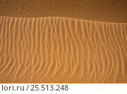 Купить «Sand formations in the Sinai desert, Egypt.», фото № 25513248, снято 20 января 2019 г. (c) Nature Picture Library / Фотобанк Лори