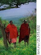 Купить «Masai warriors Serengeti NP, Tanzania», фото № 25515032, снято 17 августа 2018 г. (c) Nature Picture Library / Фотобанк Лори