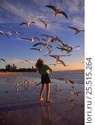 Купить «Girl feeds seagulls on beach, Florida, USA», фото № 25515264, снято 17 февраля 2019 г. (c) Nature Picture Library / Фотобанк Лори