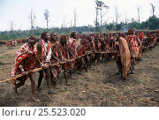Купить «Maasai warriors dance with poles during traditonal Eunoto ceremony, Mara region, Kenya», фото № 25523020, снято 17 августа 2018 г. (c) Nature Picture Library / Фотобанк Лори
