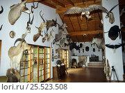 Купить «Trophy room, Klipspringer lodge, Nelspruit, South Africa», фото № 25523508, снято 17 февраля 2020 г. (c) Nature Picture Library / Фотобанк Лори