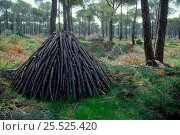 Wood pile for charcoal burning. Cota Donana, Spain. Стоковое фото, фотограф Dietmar Nill / Nature Picture Library / Фотобанк Лори