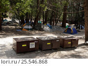 Купить «Bear boxes on camp site, Yosemite NP, California, USA. Campers must put all food, toiletries and other odorous products in bear resistant box», фото № 25546868, снято 22 мая 2018 г. (c) Nature Picture Library / Фотобанк Лори